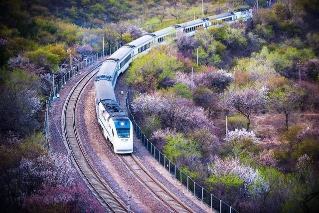 春滿京城,北京不可錯過的賞花指南