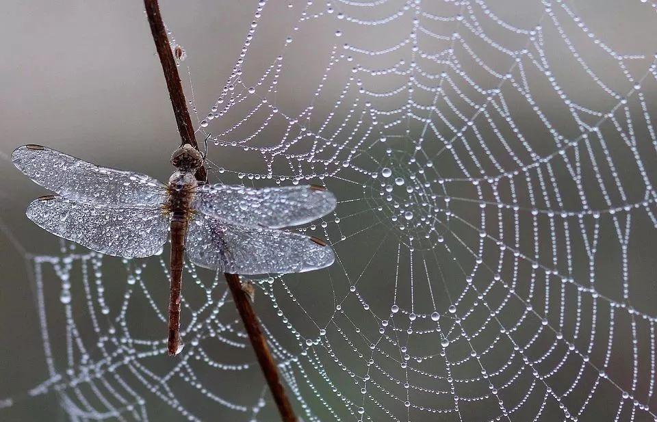 探尋昆蟲世界的奧秘:奶泡泡昆蟲日記(上)27集mp3有聲故事_圖片 12