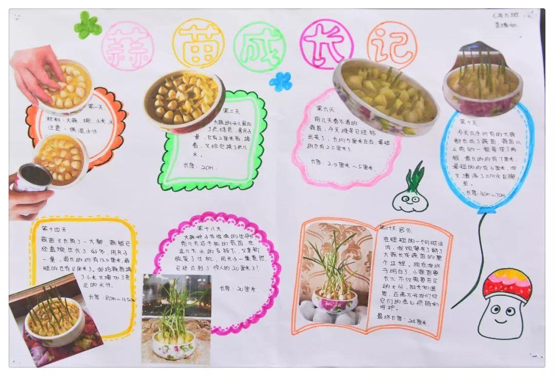 【校园风采】创意作业体验寒假乐趣 实践研学彰显别样图片