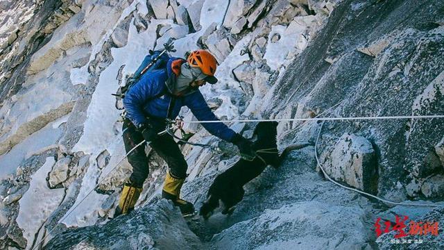 厉害!登顶七千米高峰 成为第一只征服喜马拉雅