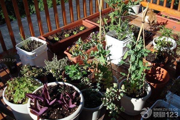 阳台菜园设计 如何diy菜园