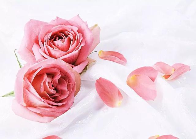 女神节   乳腺癌女性的生育指南(文末赠书福利)