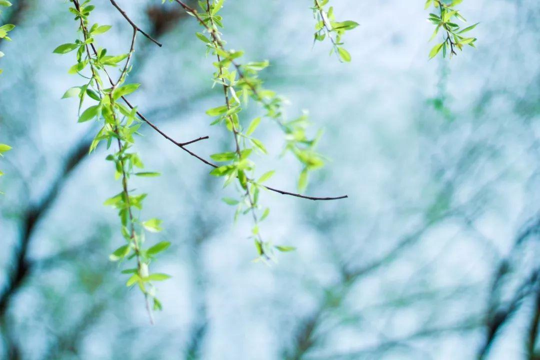 《黄帝内经》:顺应春天,向阳而生,护肝养心_养