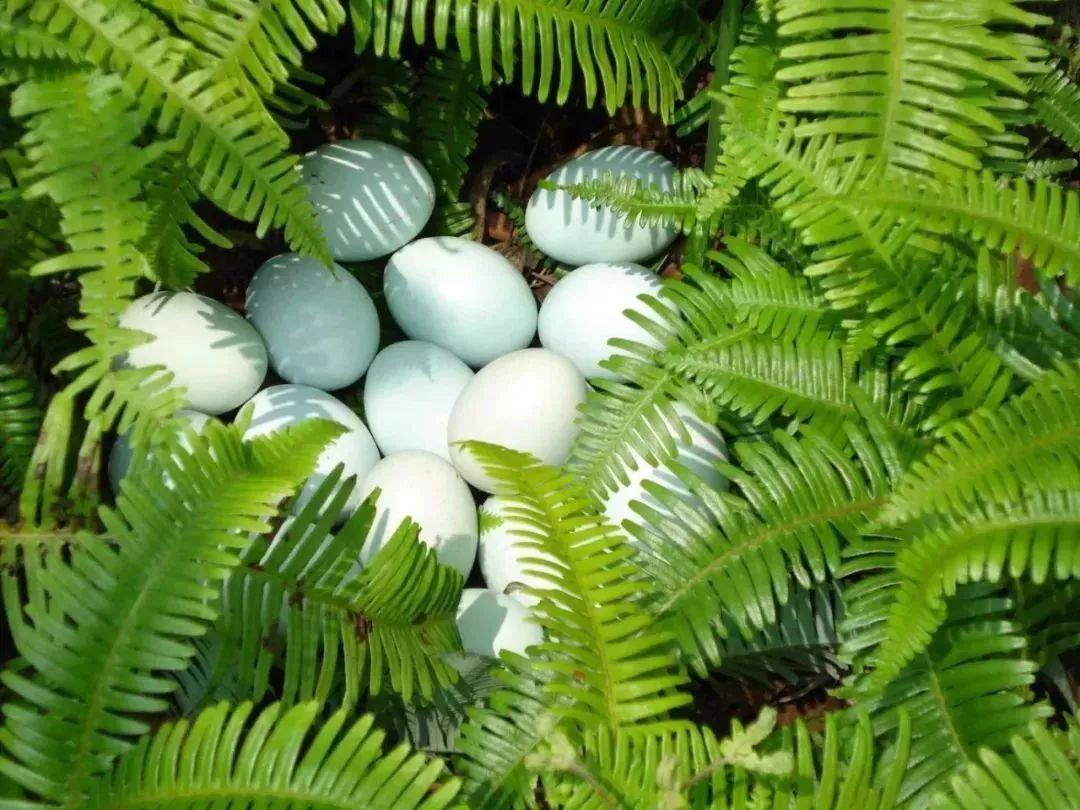 贵州鸡蛋市场价格 - 市场价格 - 黔农网