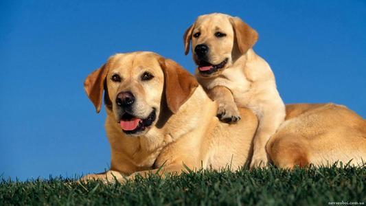 男人口中的小黄狗是啥意思_男人小蘑菇图片啥意思