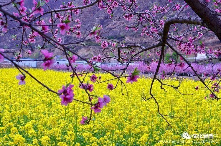 旅游新发现 | 宕昌春季赏花图鉴来了,最美的春天都藏在这里_桃花