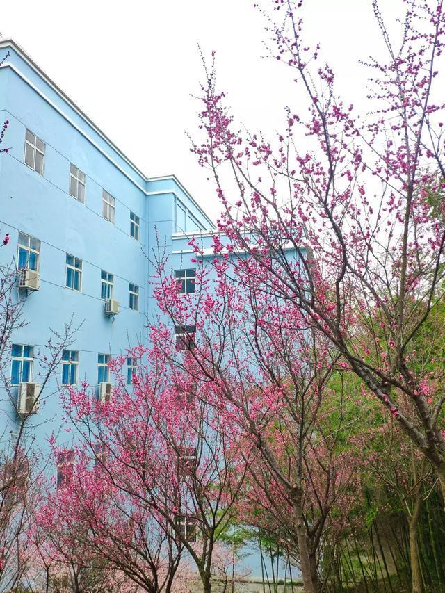 周末连晴气温最高20℃!武汉这份出游赏花攻略请查收…