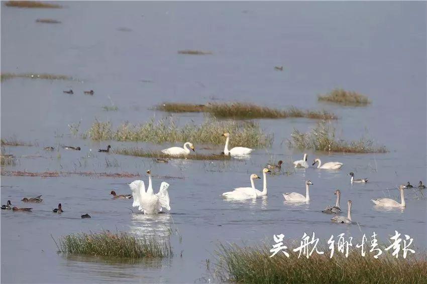 招来百鸟作芳邻!来长乐看最美湿地,感受天然氧吧