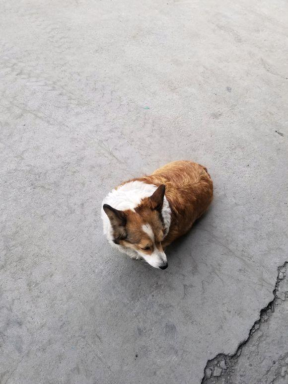 车库入口一只流浪狗差一点被车撞,女孩领回家里后才知这狗不简单_狗狗 萌宠趣闻 第1张