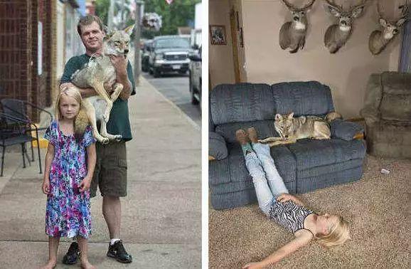 女孩错把狼当做宠物狗养,三年以后,狼却用这样的方式报答了女孩_狗狗 萌宠趣闻 第4张