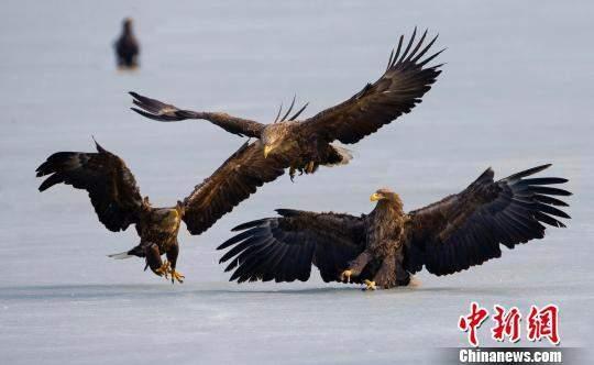 北归候鸟云集中俄边境 各国游客共赏迁徙奇观