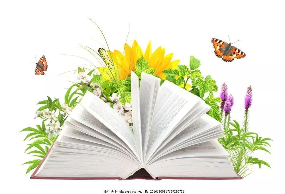 高清创意花束植物书…