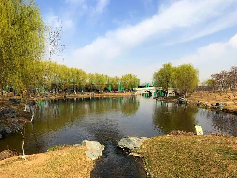 湿地光影 | 我在春天等你,只因湿地公园太撩人!