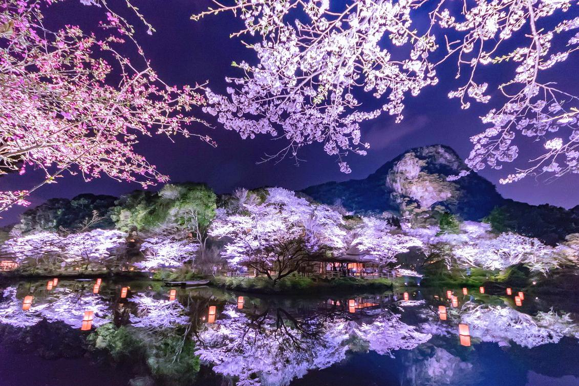日本樱花_关于日本樱花,你至少要知道这些