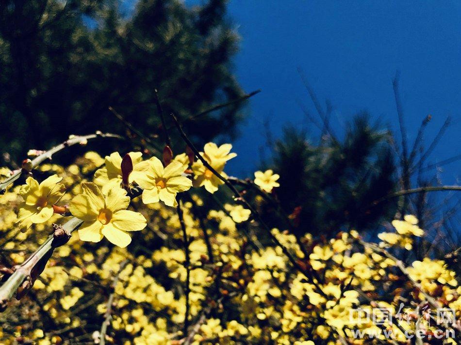 春风十里不如满园春色 北京进入最美赏花季