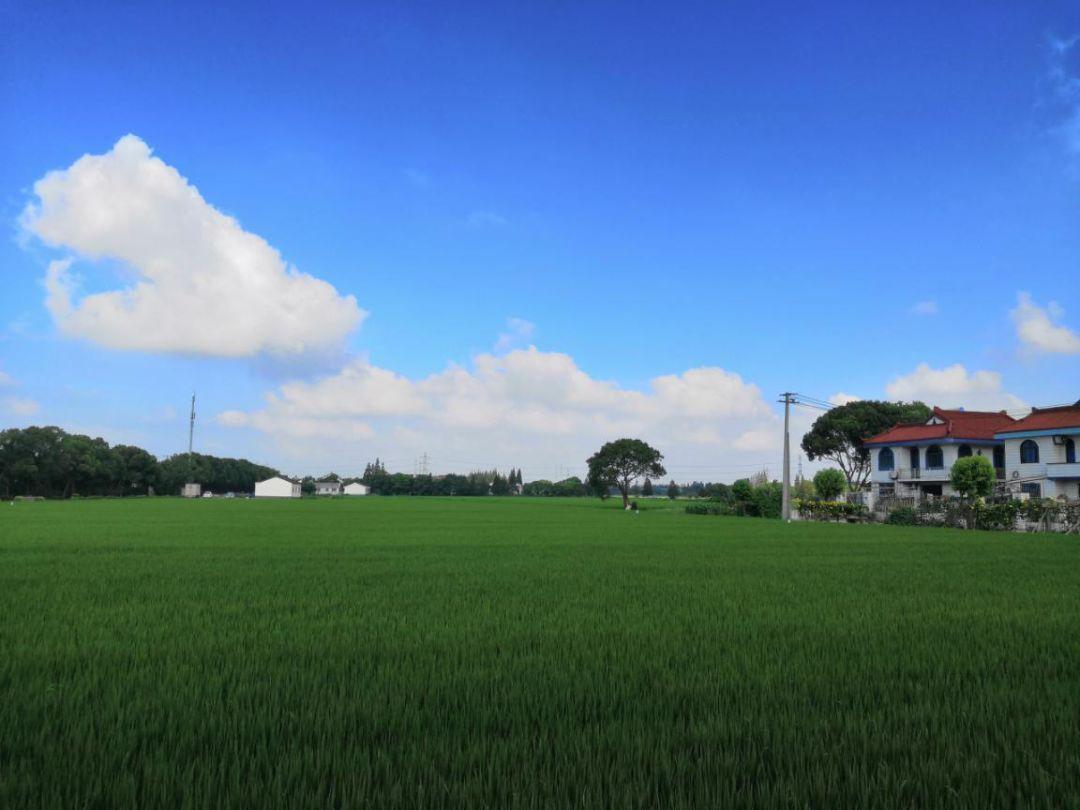 闵行又有两个村参选市级乡村振兴示范村