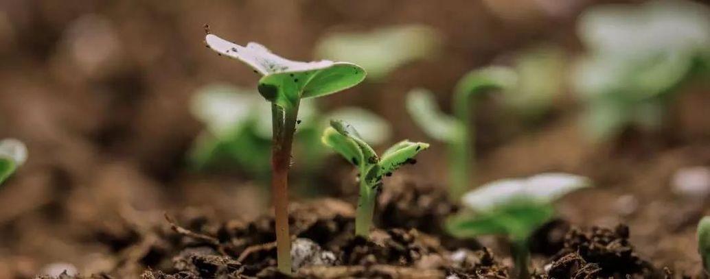 植树节宣传片 | 带着地球去远方