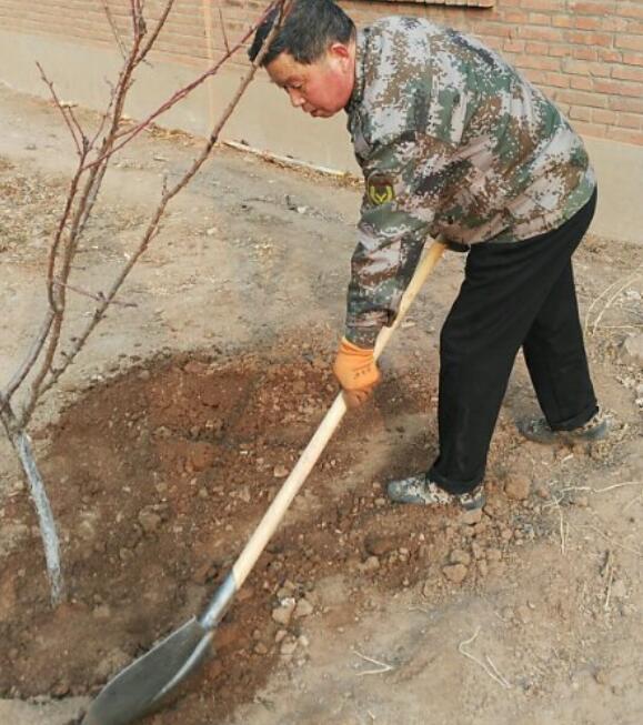 军创老兵种下创业树——记邢台县退役军人返乡创业园植树活动