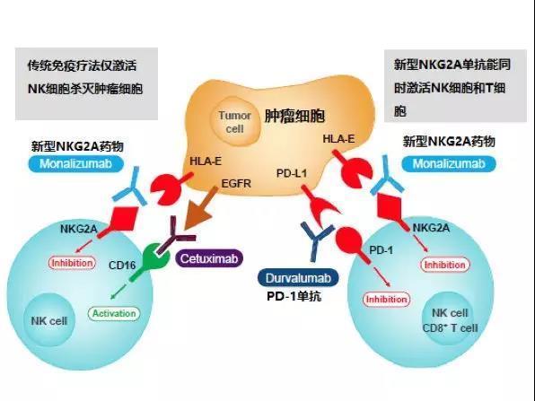 《细胞》重磅:新药有望大幅度提高PD-1有效率!
