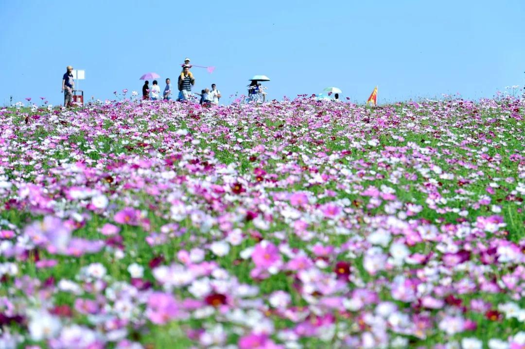踏青赏花放风筝 三月春游来这里