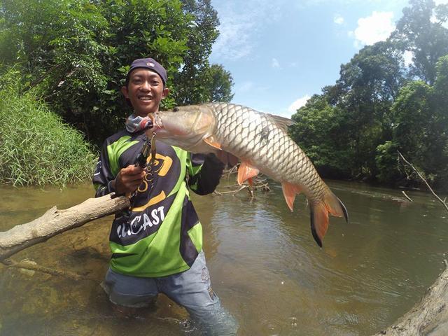 湄公河不愧是钓鱼人的天堂,各种神奇的鱼种让人眼花缭乱