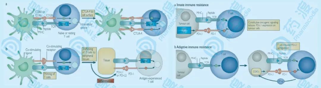 NK细胞,肿瘤免疫治疗的新方向