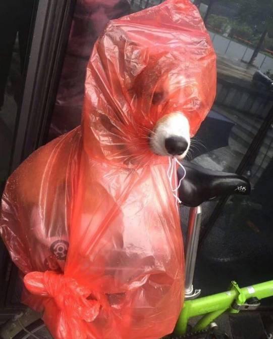 出门遛狗结果下雨了,于是铲屎官脑洞大开