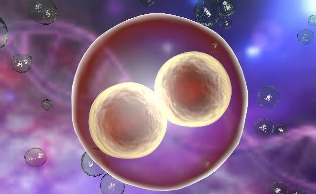 若两个精子与一个卵子相结合,会发生什么呢?看完或许就清楚了