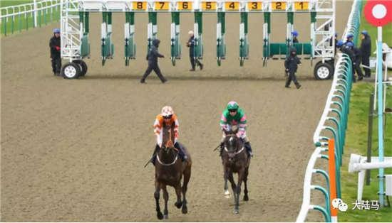Aquis雅士牧场赛马新闻:英国立博锦标比赛仅两匹赛驹出赛