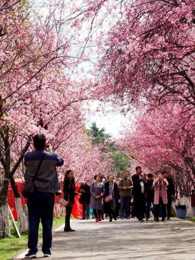 """跟我走吧周六就出发,一起组团在昆明各地""""寻春"""""""