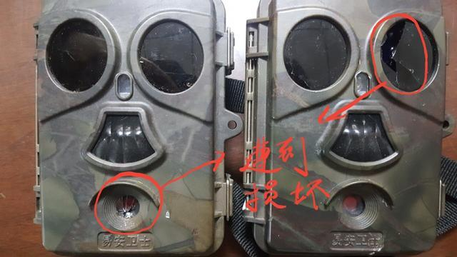 功夫熊猫?又啃又抓,四川九寨沟大熊猫玩坏2台红外相机