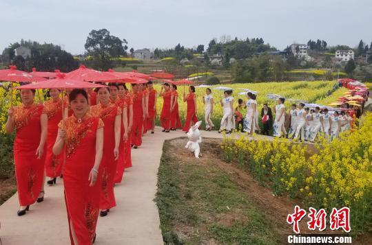 100余位重庆旗袍快乐喜爱者油菜花海中走秀