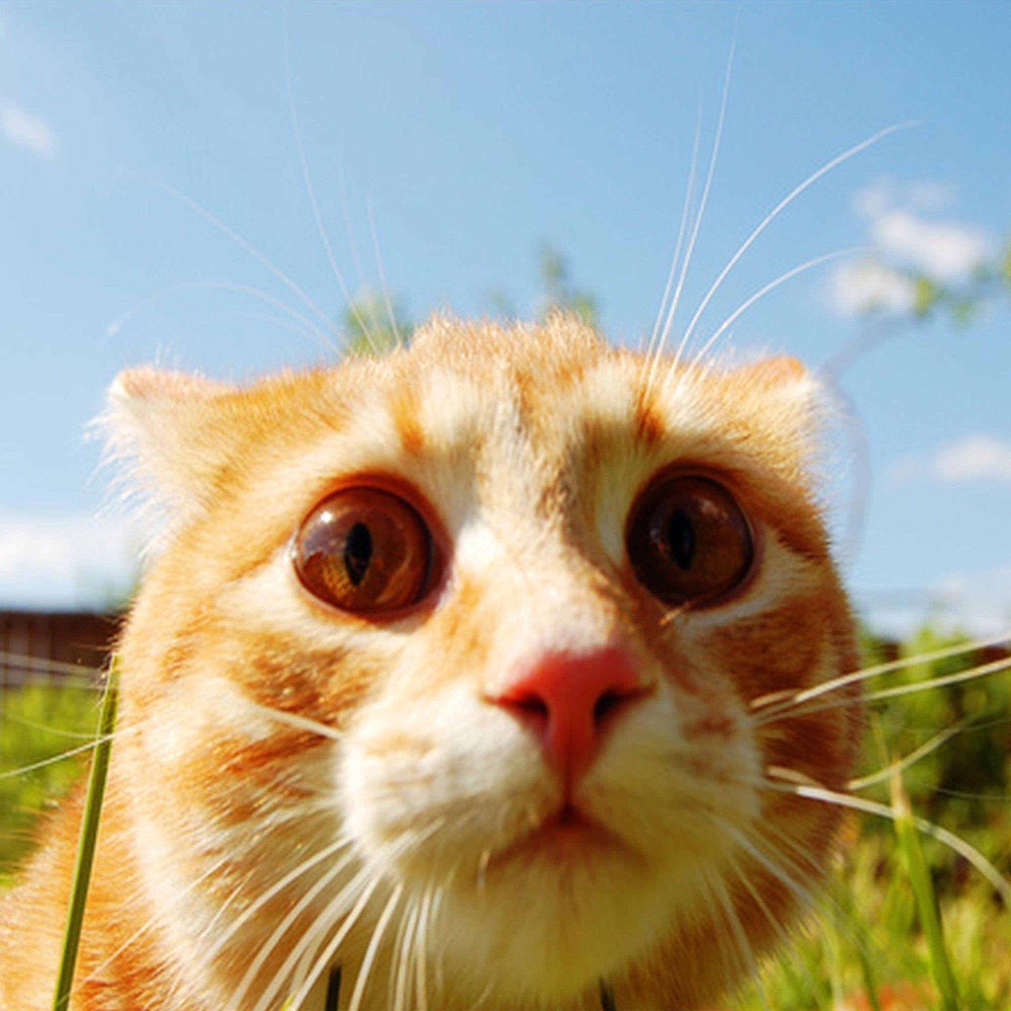 家中遭遇变故,是回家孝敬老人还是留下照顾猫咪?二者并不冲突