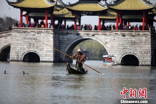 """江苏扬州瘦西湖上演""""鸬鹚捕鱼"""" 原汁原味演绎古老捕鱼技艺"""