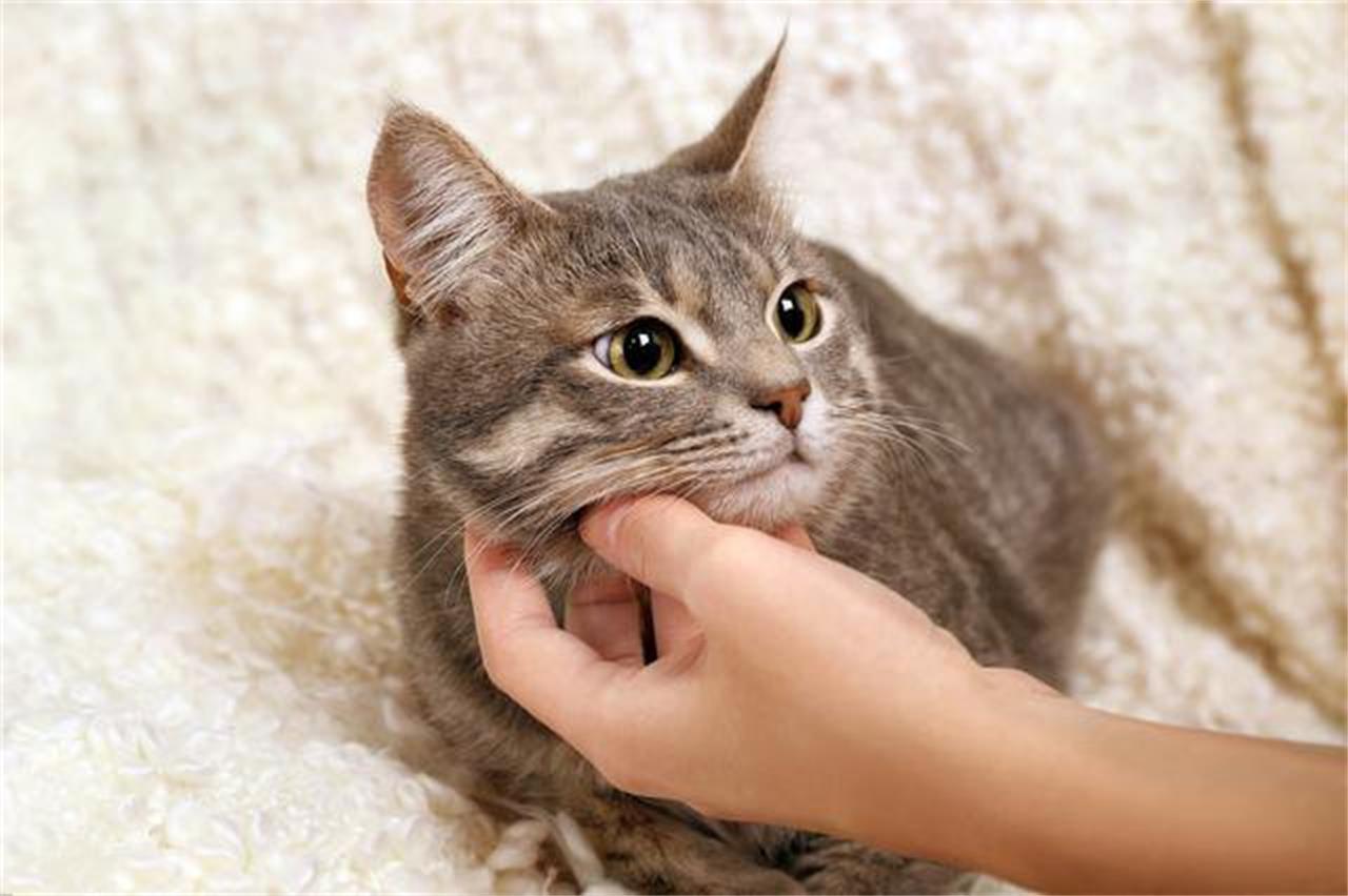 怎么训练猫咪拜年姿势图片