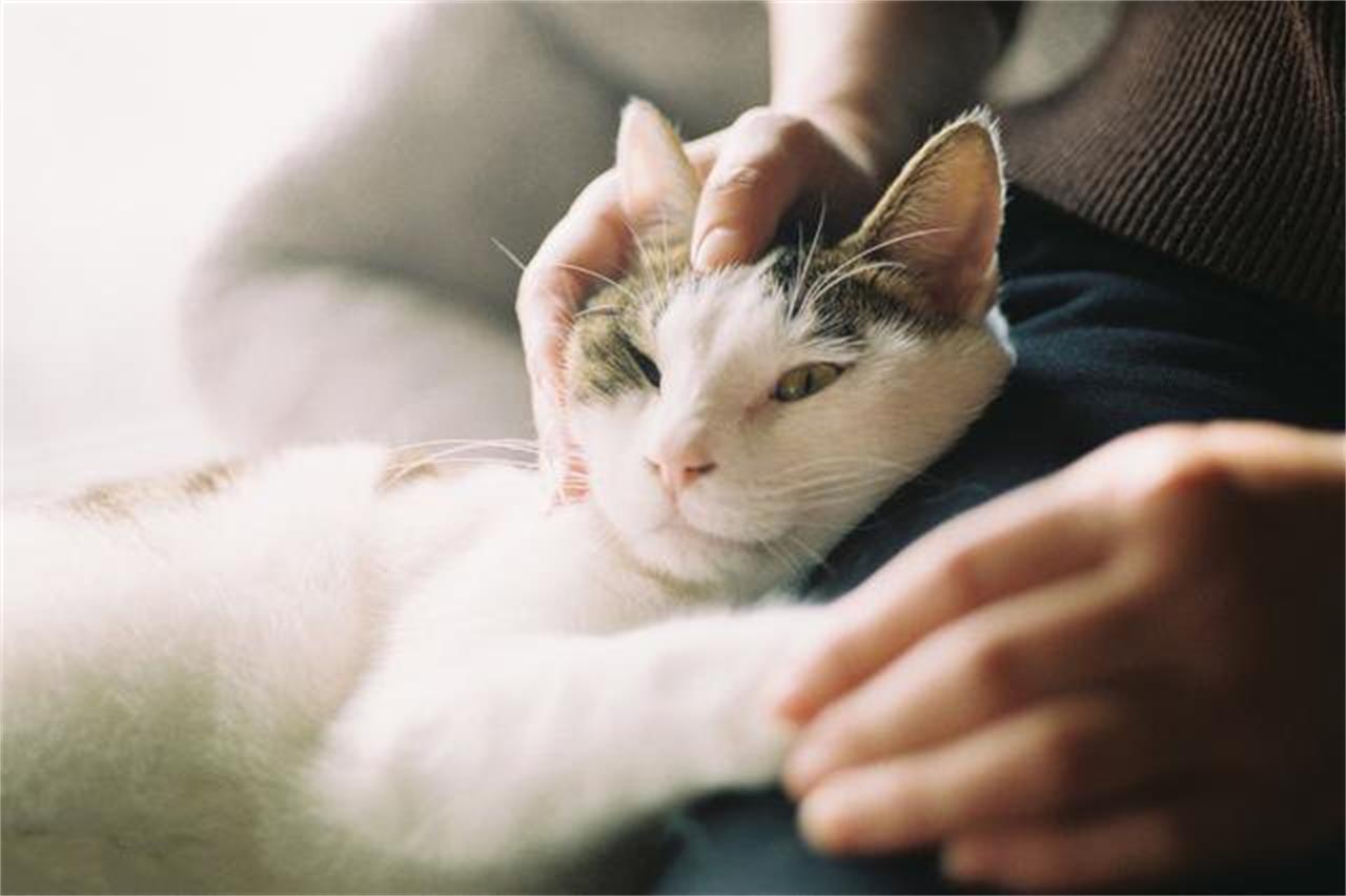 训练一只猫作揖要多久图片