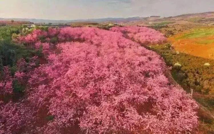 旅游 正文  宜良樱花谷 宜良樱花谷位于宜良县匡远街道,面积达3800亩.