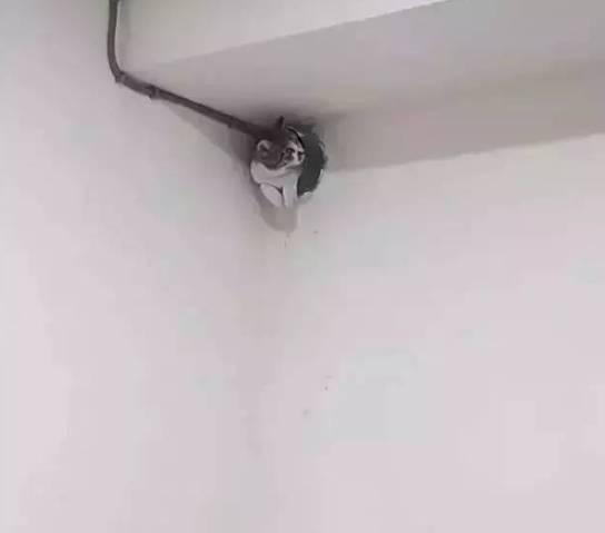猫无故失踪的原因!