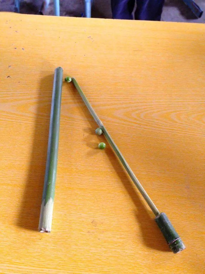 樟树籽枪是什么原理_樟树的叶子是什么形状