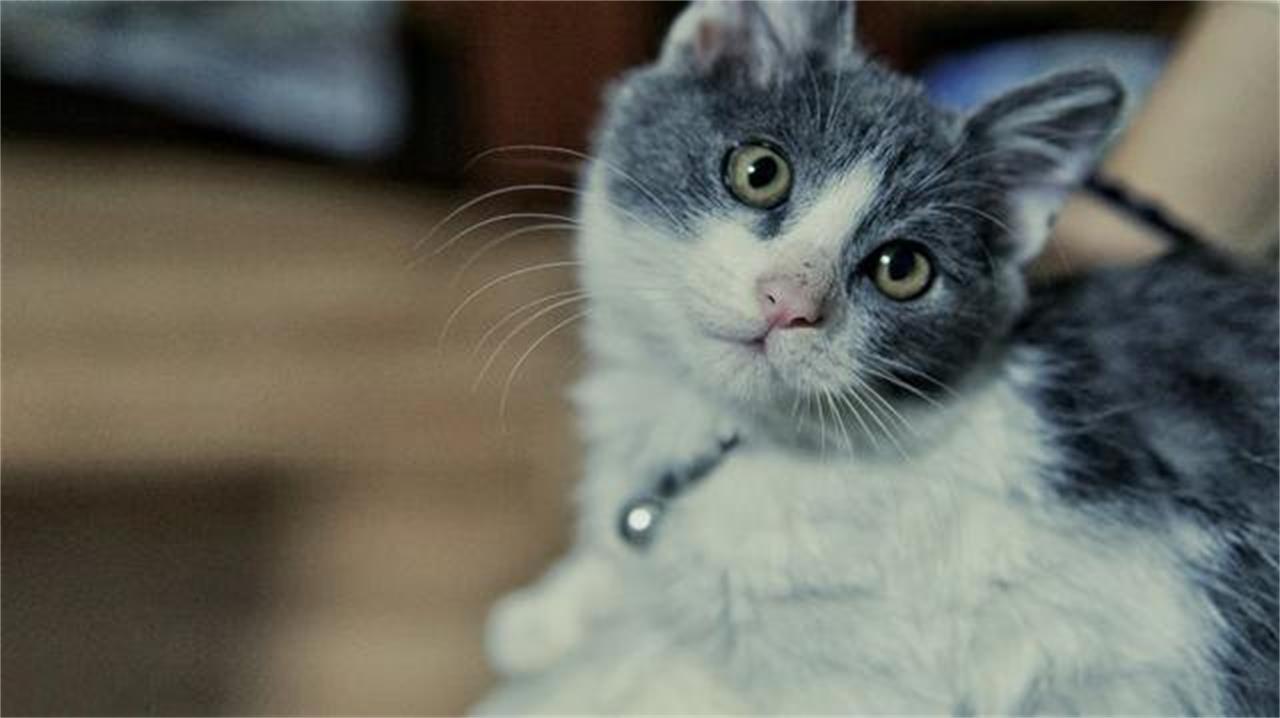 猫语手册,总结了一下猫咪喵喵叫的含义,仅供参考