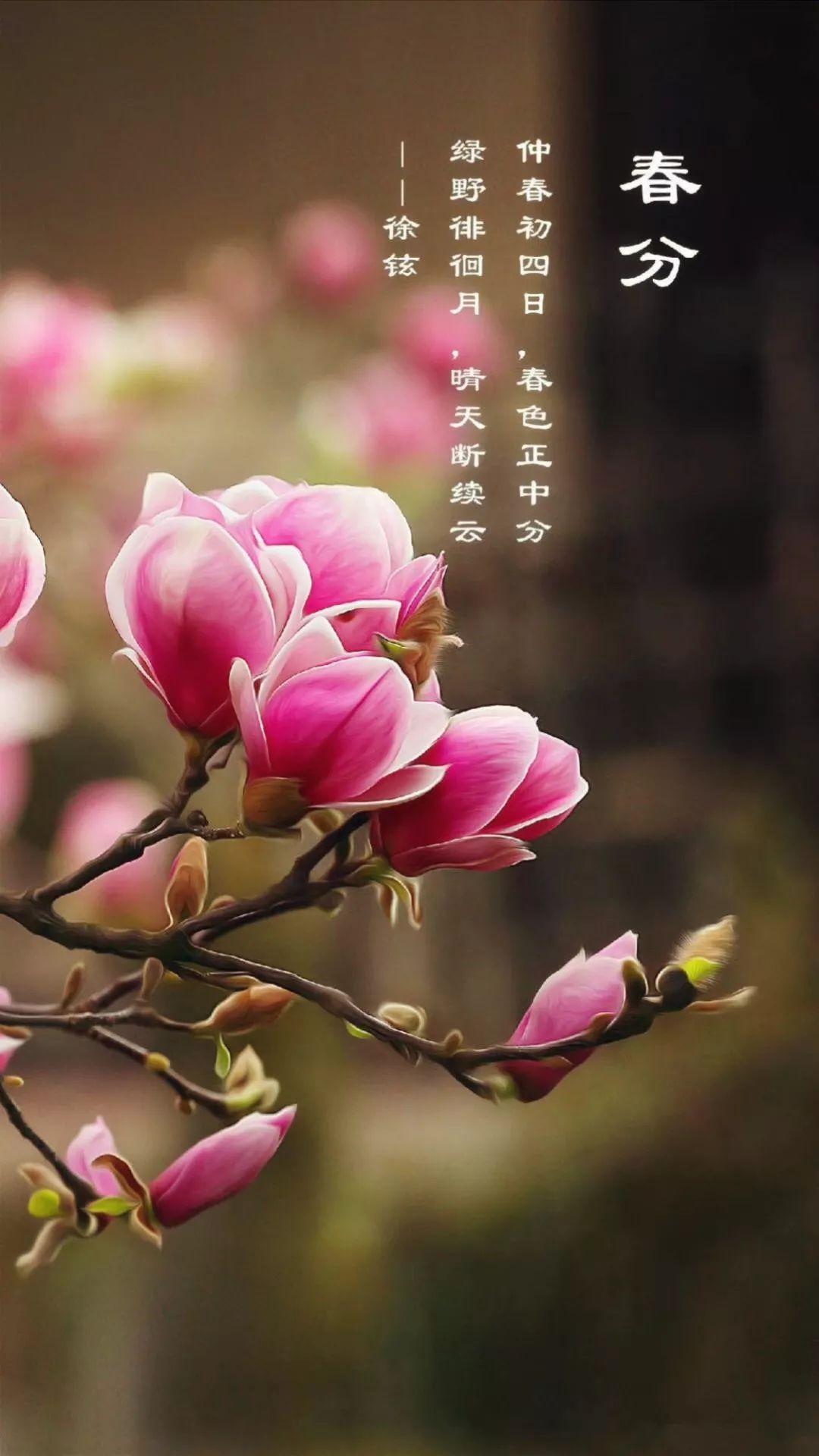 【春城秀】最是一年好时节,一朝春色看昆明