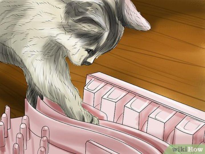 怎样阻止猫咪欠欠的小爪子?