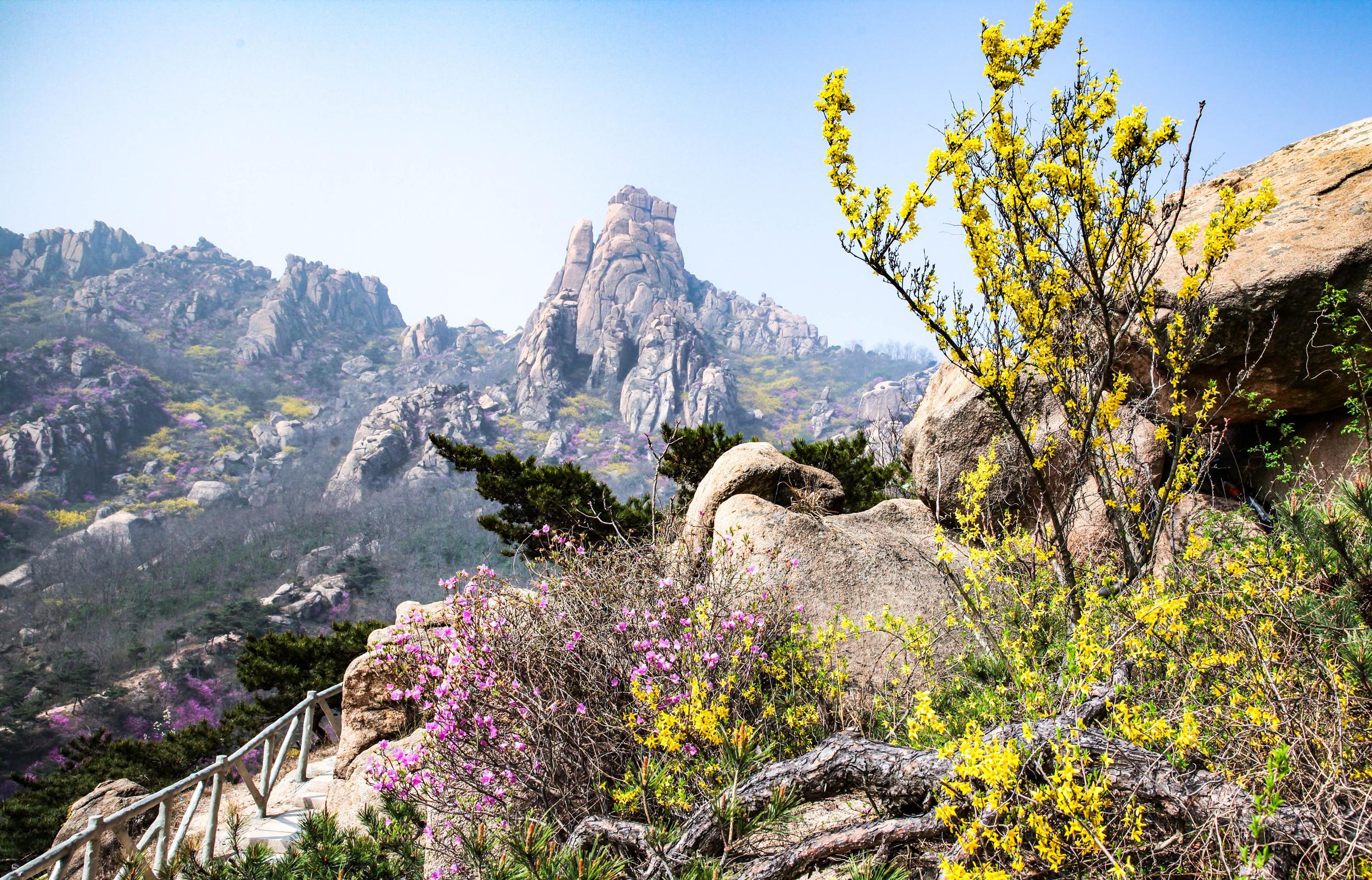 青岛大珠山山会_青岛大珠山的杜鹃花成为花的海洋_石门