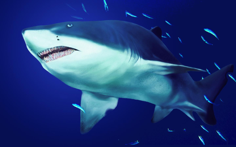 鲨鱼 伟大的白色战斗和来自深处的生物