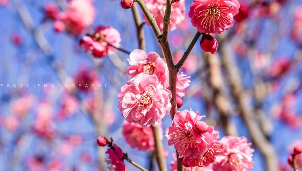初春,踏着圣人仙迹发现中华文化的博大精深_孔子