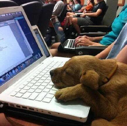 搞笑gif趣图:这课程也太难了,根本听不懂,我还是先睡会吧!