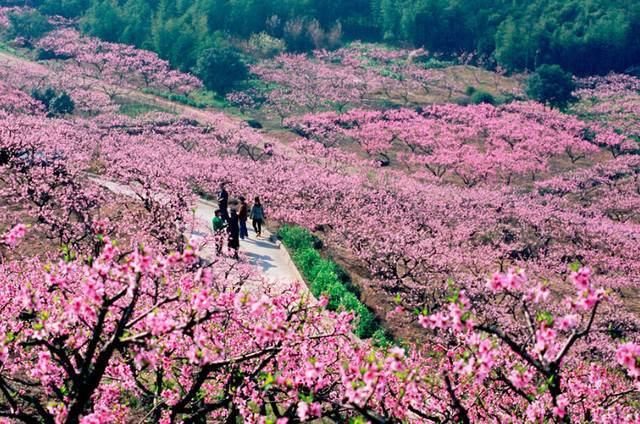 """浙江这8处绝美桃花林,把你想要的""""桃花运""""都_南岳衡山旅游攻略"""