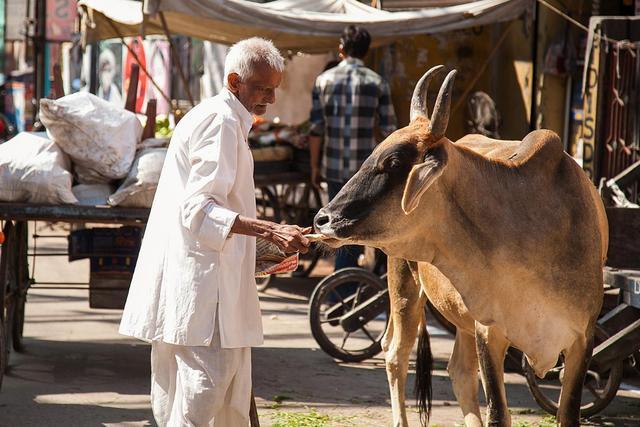 为什么印度是牛肉出口大国,印度人却崇尚吃素呢?涨知识了