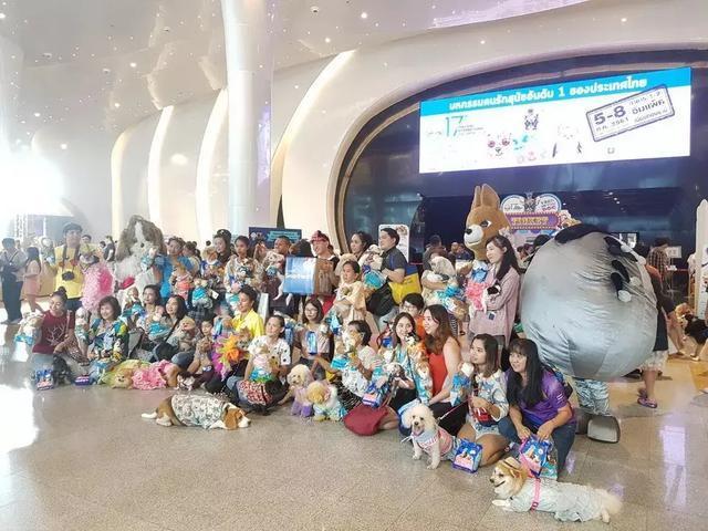 4天15万人参观丨泰国宠物狗展,一场你不能错过的盛会!