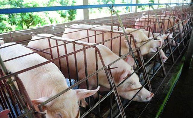 人口蹄疫_天气日渐转冷,口蹄疫防控养猪人一定要重视(2)